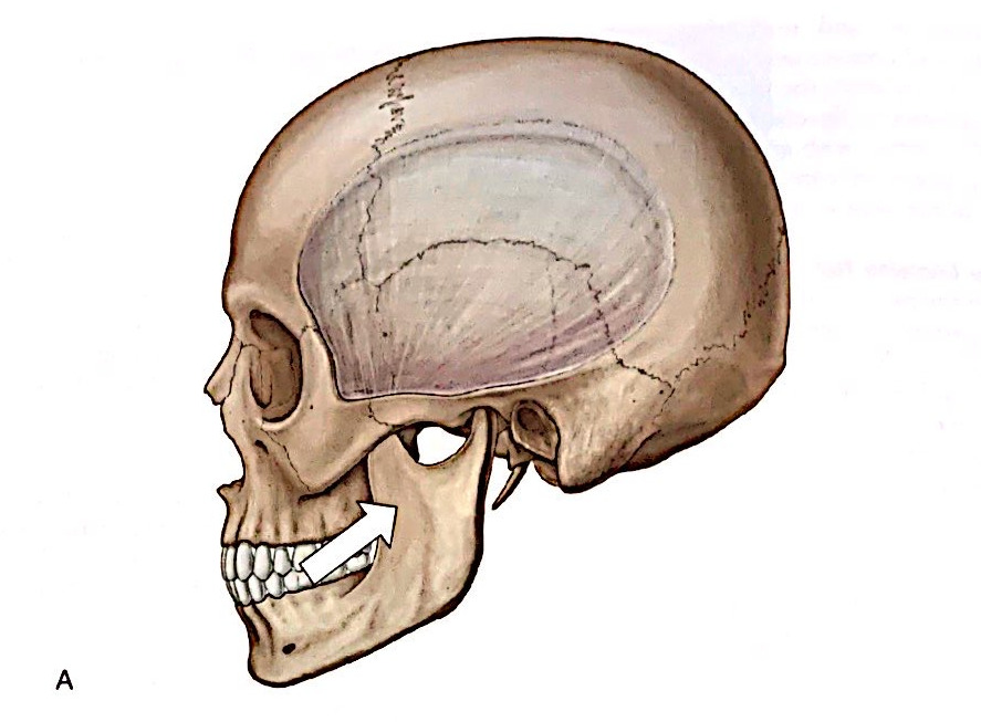 アクティベータ・メソッドによる顎関節症への施術1