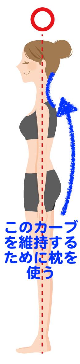 枕を使う意味は、頚椎のカーブを維持するため